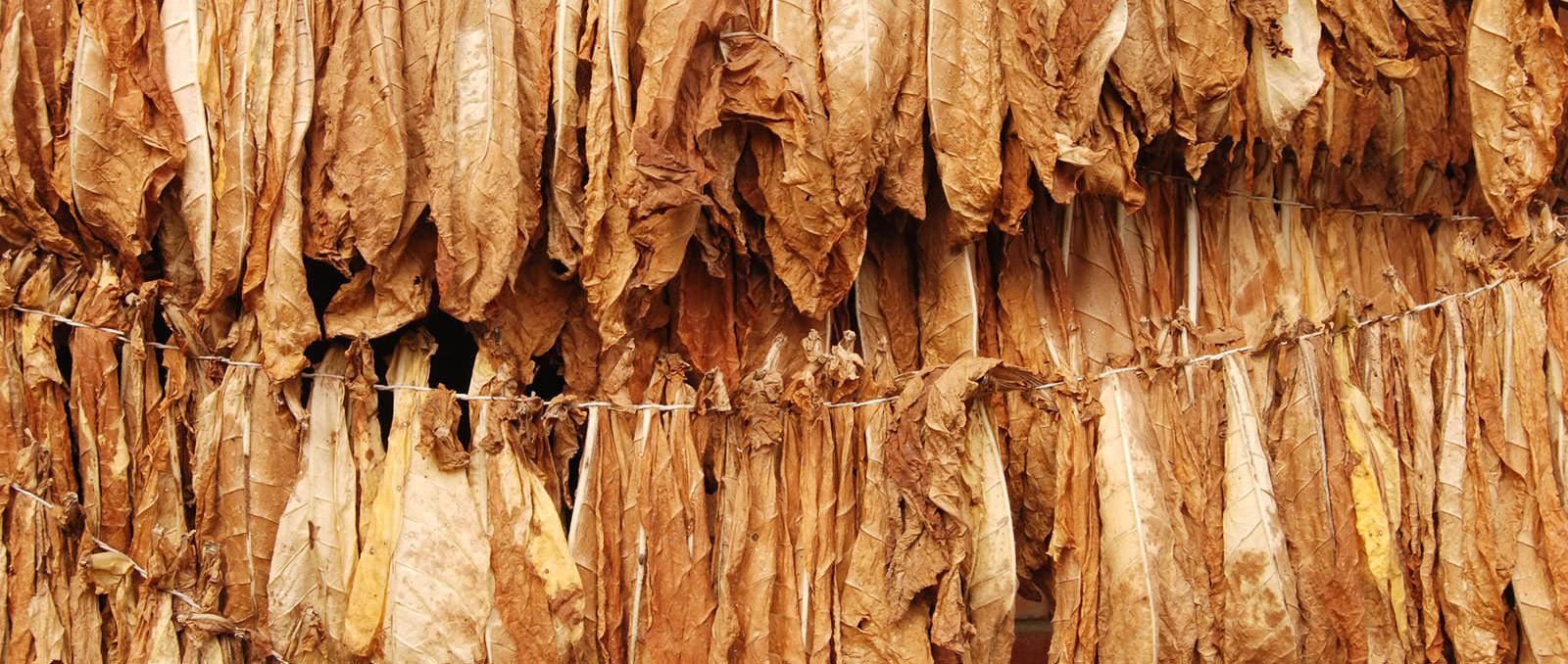 virgo-tobacco-home